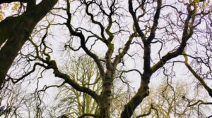 Eight Amazing Health Reasons to Visit The Trees in London