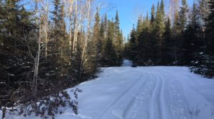 Cross Country Ski to the Health Benefits of Trees