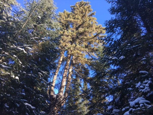 7 Health Benefits Of Tree Aerosols Treesmendus